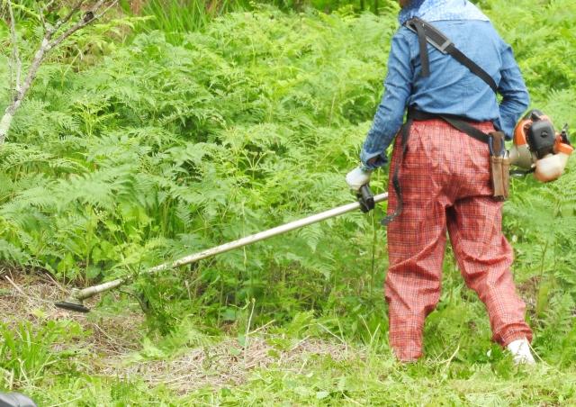 金沢市で草刈りにかかる料金相場は?追加料金や業者選びのコツまで解説